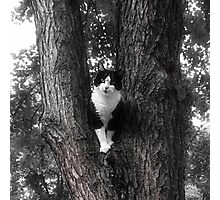Black and White Rescue  Cat Posing in Tree Photographic Print