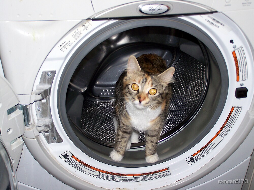 how to wash your cat by tomcat2170