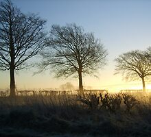 Winter scene..a misty morning in the U.K. by frozencalla