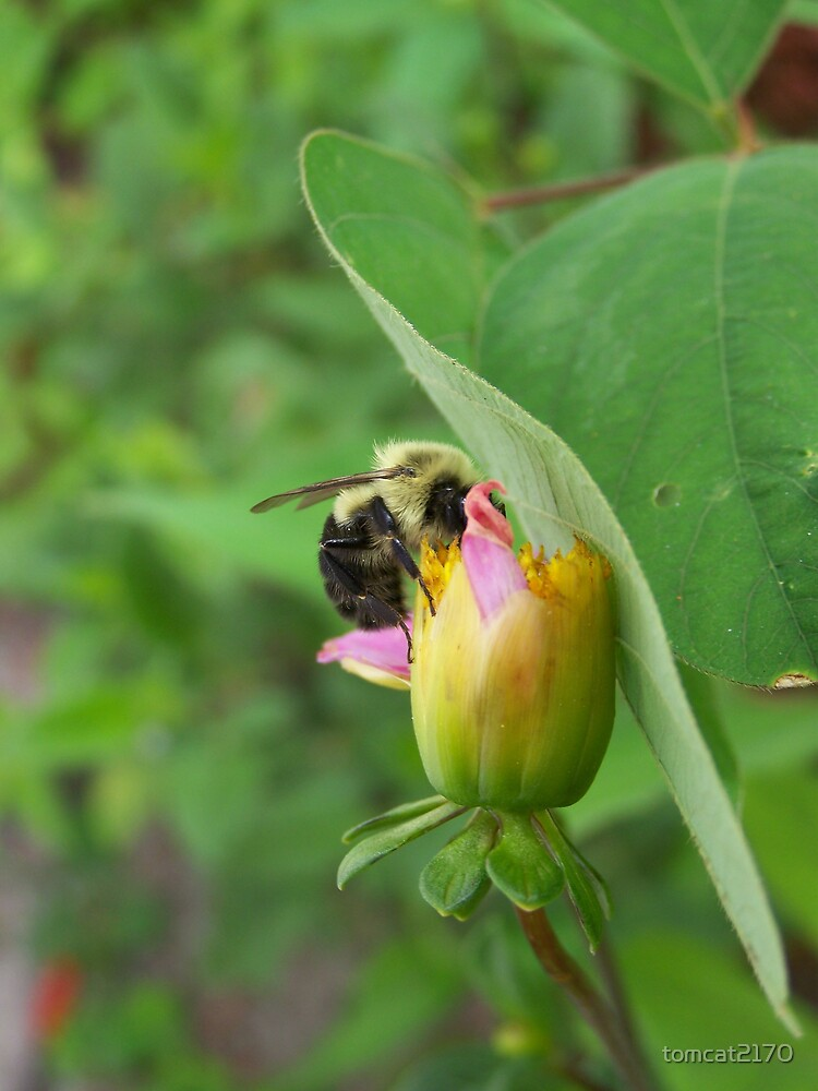 bee on bud by tomcat2170