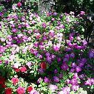 flowers in the shade by oilersfan11