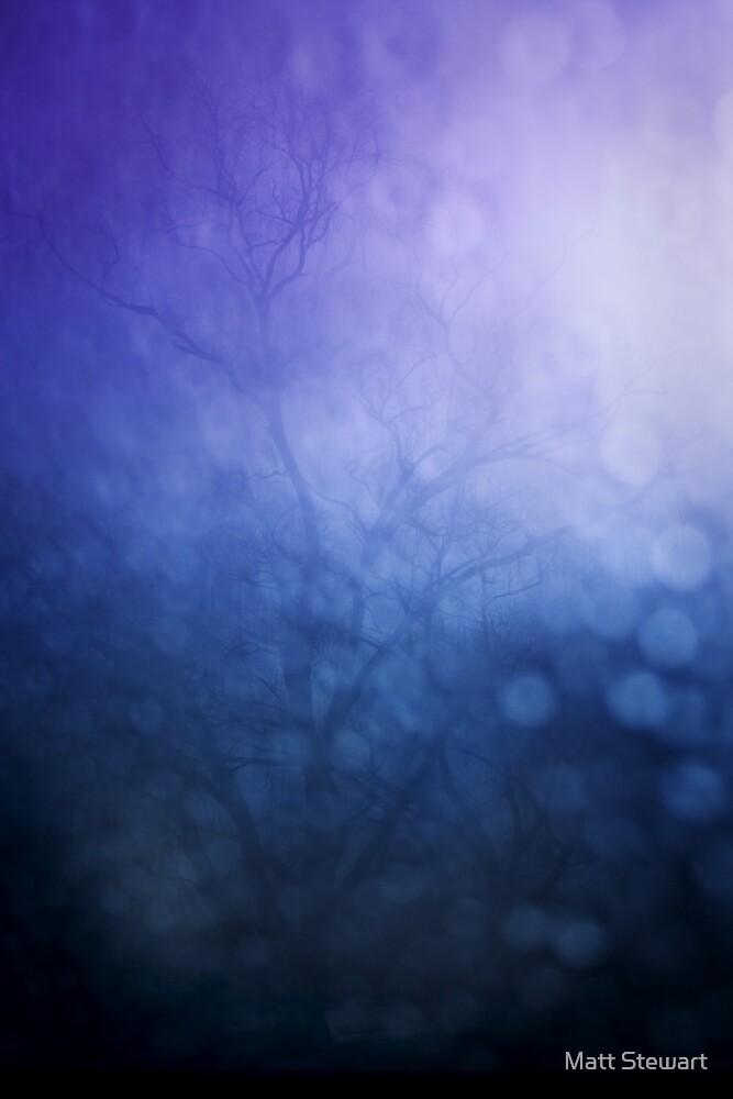 Violet through the window by Matt Stewart