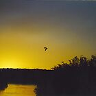 Bird at sunset. by Rosy