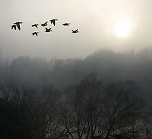 Misty morning on South Esk by Christine Beswick