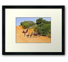 Emu Family  Framed Print