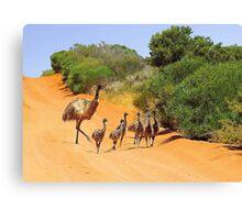 Emu Family  Canvas Print