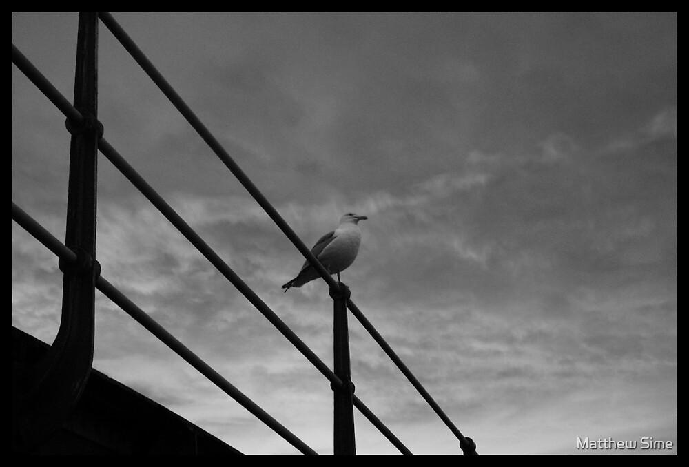 seagull by Matthew Sime