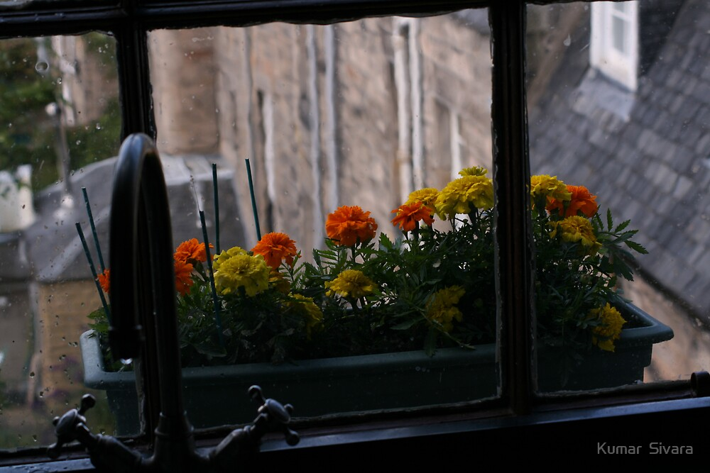 MY KITCHEN WINDOW  by Kumar  Sivara