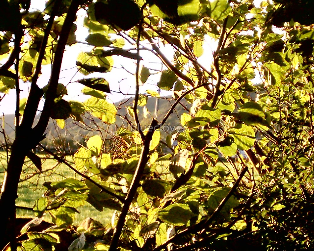 Sunlight through dappled leaves by blueclover