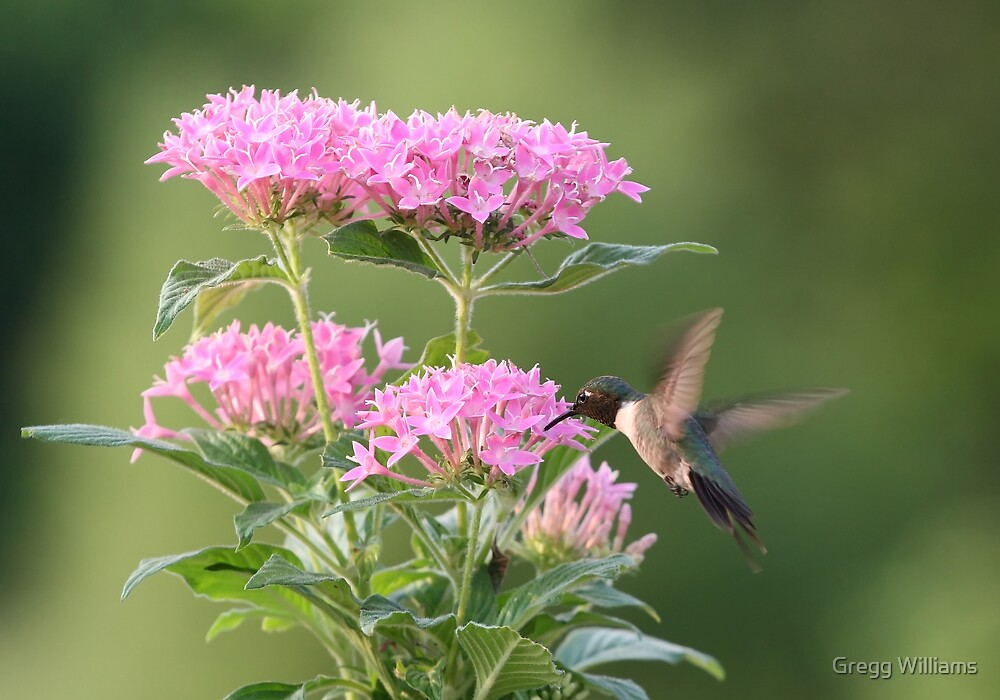 Hummingbird and Blooms by Gregg Williams
