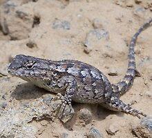 scaled lizard by tomcat2170
