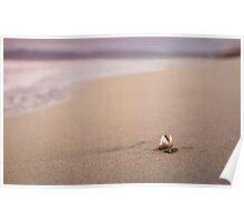 A Seashell's Repose Poster