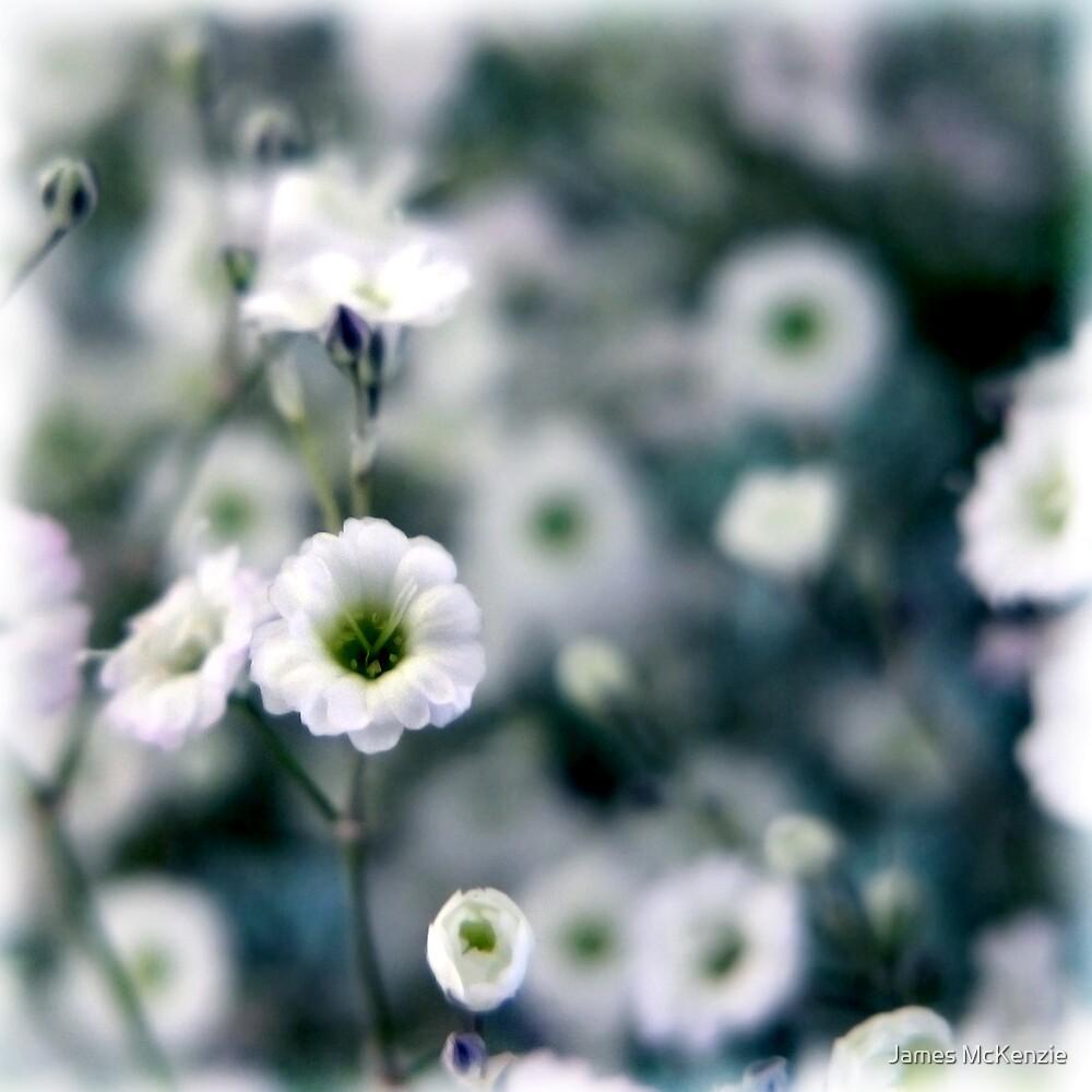 Cold Flower by James McKenzie