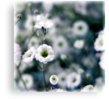 Cold Flower Canvas Print