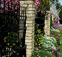 Garden Beauty Toowoomba, Qld, Australia by sandysartstudio