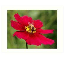 Bee on Top Art Print