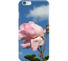 Pink Rose and Bud against Blue Summer Sky iPhone Case/Skin