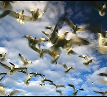 Seagull Swarm One by AbbieJebson