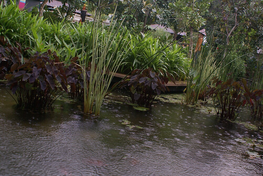 Singapore - Sentosa Pond and Plants by tmac