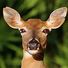 White Tailed Deer Profile by jozi1