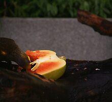 Singapore - Sentosa Bird Eating Fruit 1 by tmac