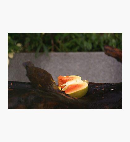 Singapore - Sentosa Bird Eating Fruit 2 Photographic Print