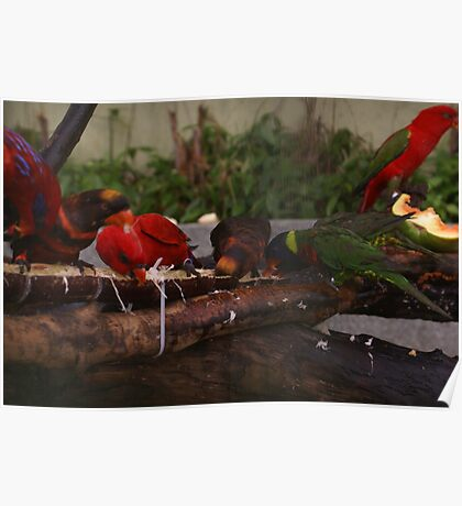 Singapore - Sentosa Birds Eating 1 Poster
