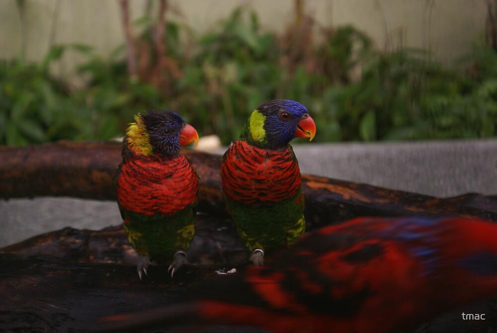 Singapore - Sentosa Twin Birds 1 by tmac