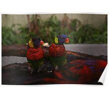 Singapore - Sentosa Twin Birds 1 Poster