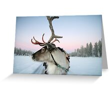 Lapland Reindeer Greeting Card
