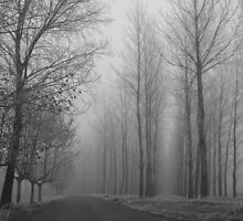 fog by MariaJC