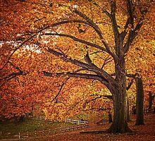 Oak Trees  by LudaNayvelt