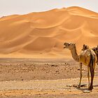 Wild Camels by Omar Dakhane
