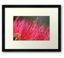 Plush Pink Framed Print