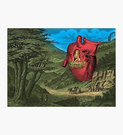 Heart's Ease Traveler's Rest Photographic Print