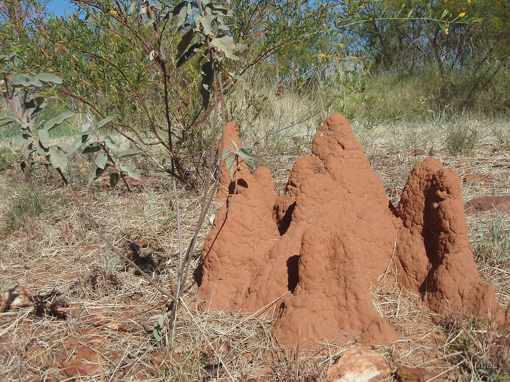 Tennant Creek, NT, Australia - Termite Castle 2 by tmac