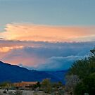 Evening Light in Borrego by Barbara  Brown