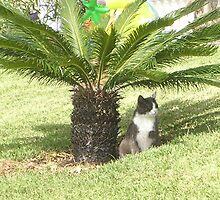 Mediterranean Kitten by Debby Allen