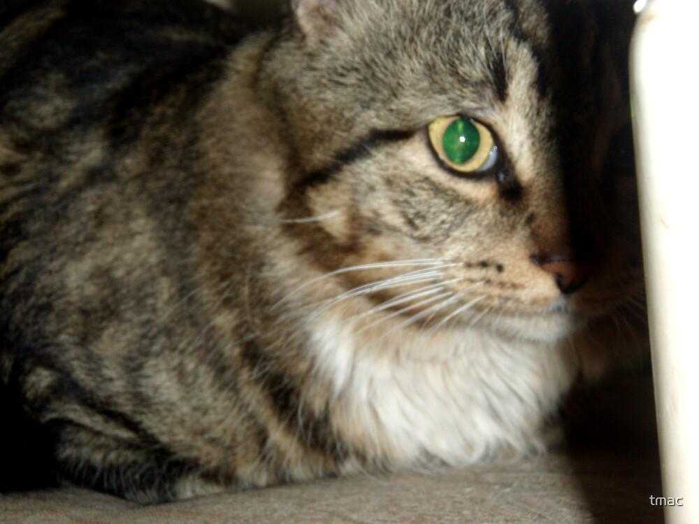 Tennant Creek, NT, Australia - Hiding Cat by tmac