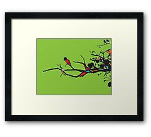 twigs mixed colours Framed Print