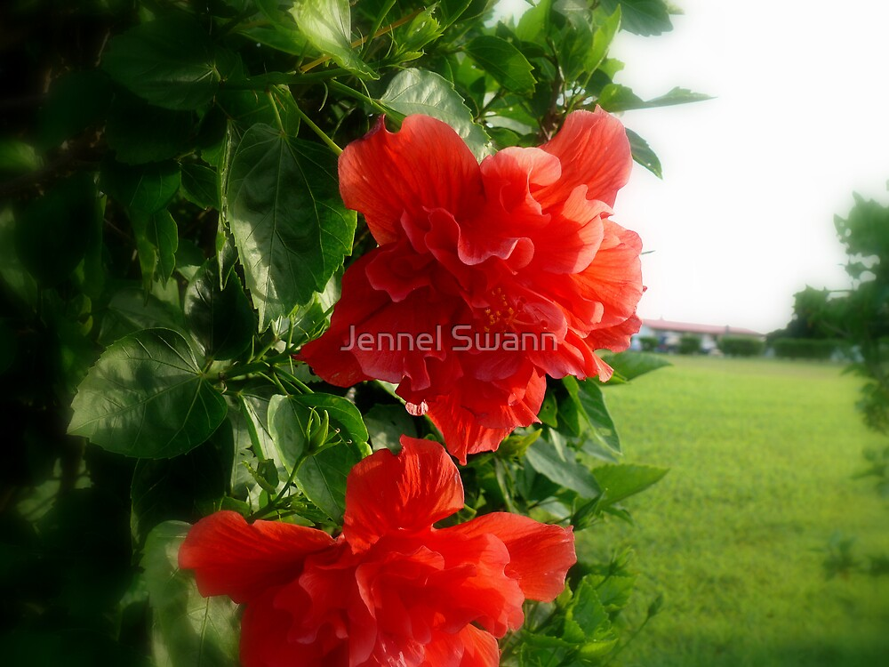 Scarlet Kiss by Jennel Swann
