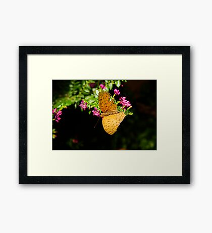 Light brown coloured butterfly Framed Print