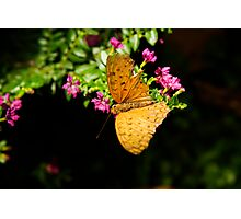 Light brown coloured butterfly Photographic Print