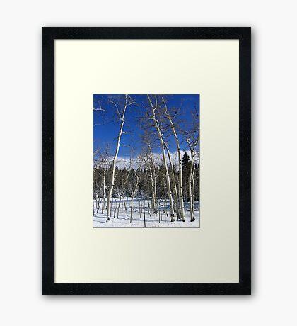 Dusted Aspens Framed Print