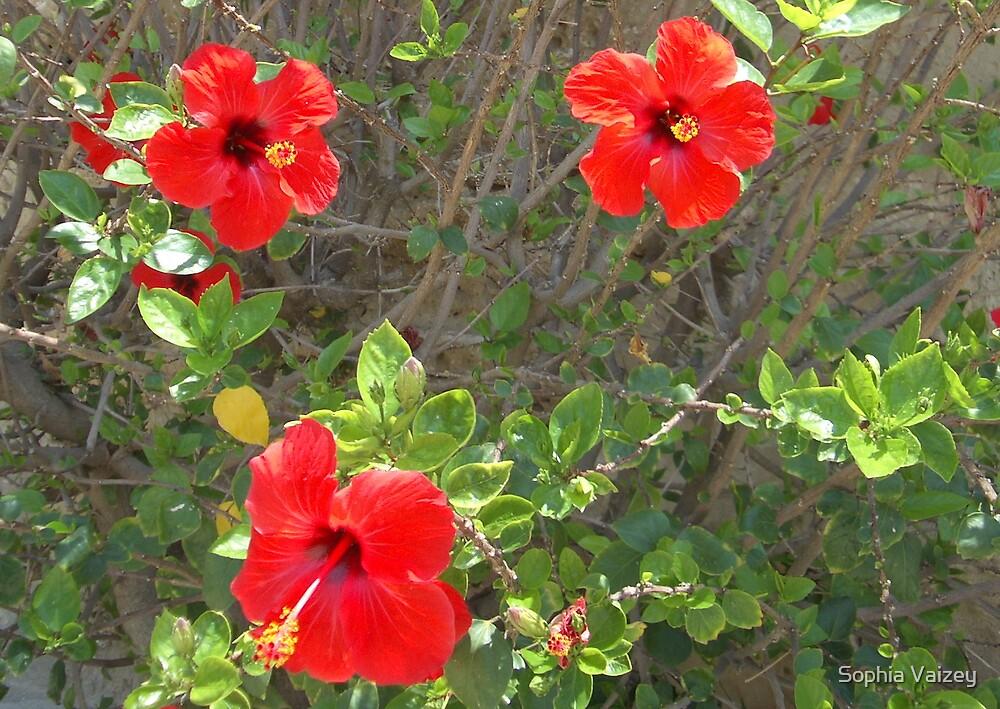 Red Flowers by Sophia Vaizey