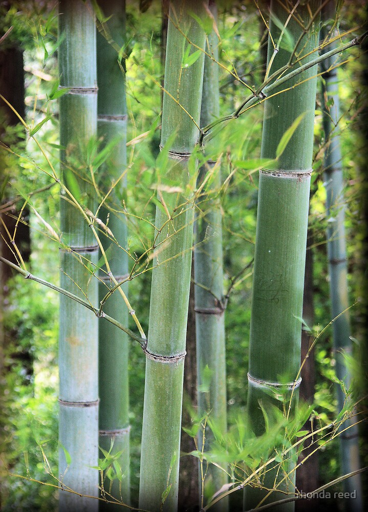 Bamboo forest by rhonda reed