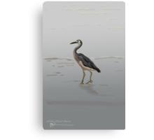White-faced Heron Canvas Print