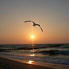 Sea bird by FELIX