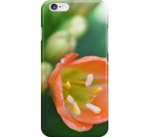 Apricot Butter iPhone Case/Skin
