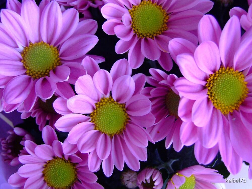 Pink Daisey by kelbel75